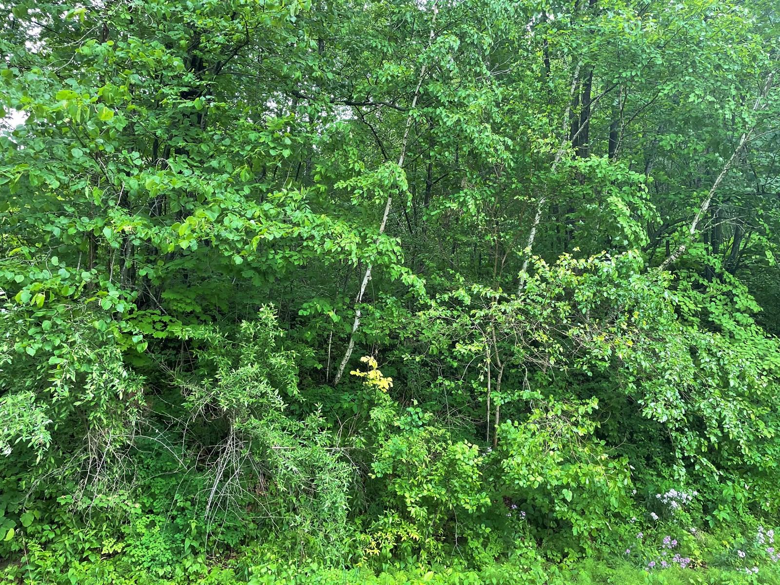 Secluded Lot in Poynette Wisconsin