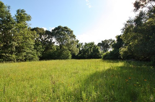 Land For Sale in Leon County, TX
