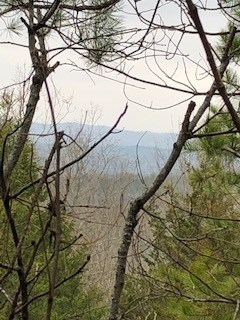 Hunting and Recreation Land for Sale Near Calico Rock