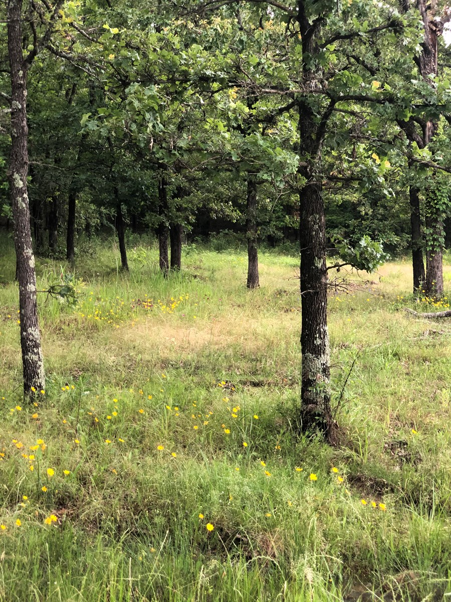 HOMESITE WITH ACREAGE, WISTER LAKE, WOODED