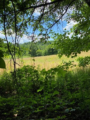 19 ACRES UNRESTRICTED LAND IN HANCOCK CO., TN FOR SALE
