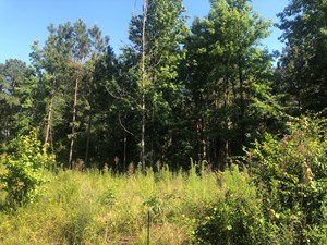 EAST TEXAS LAND FOR SALE TIMBERLAND AND RECREATIONAL