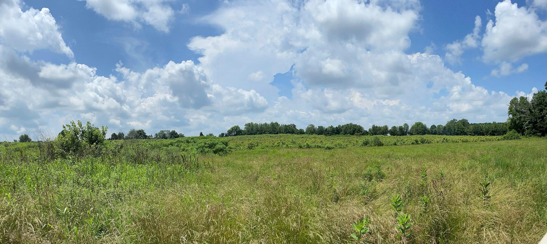 32 Acres, Vacant land, Baby farm