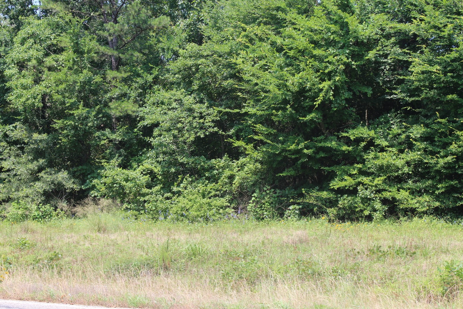5 EAST TEXAS ACRES - NO RESTRICTIONS - WOOD COUNTY, TX