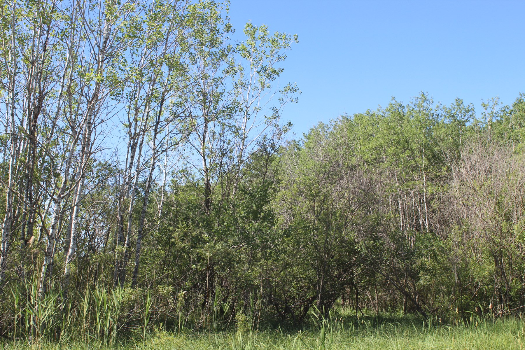 Kanabec Country 10 Acres for Sale