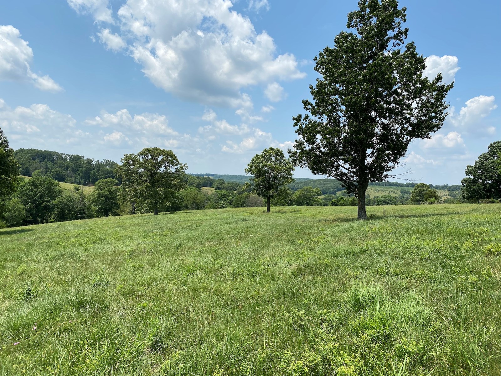Southern Missouri Cattle Ranch for Sale - Brick Home
