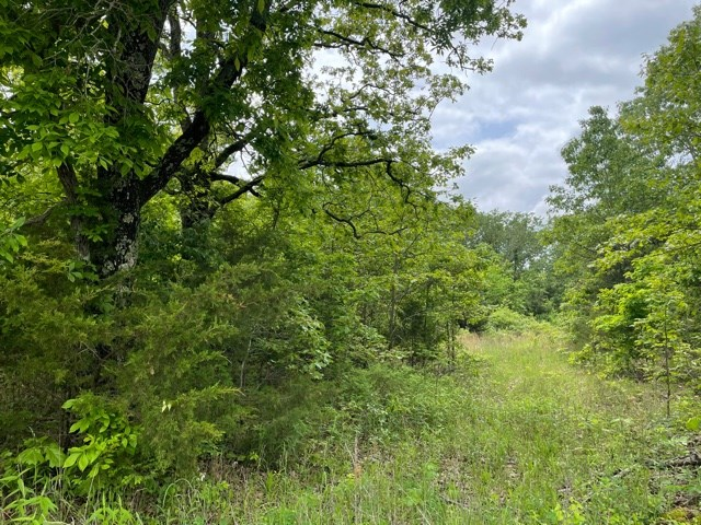 Land For Sale In Dadeville, Mo