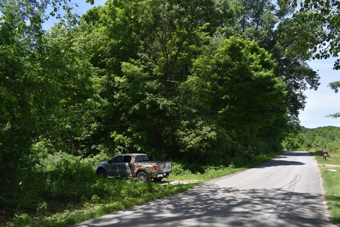 Washington County Hunting and Recreation, Timber Property