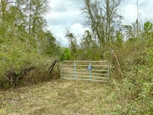 PRISTINE HUNTING LAND IN NORTH FLORIDA