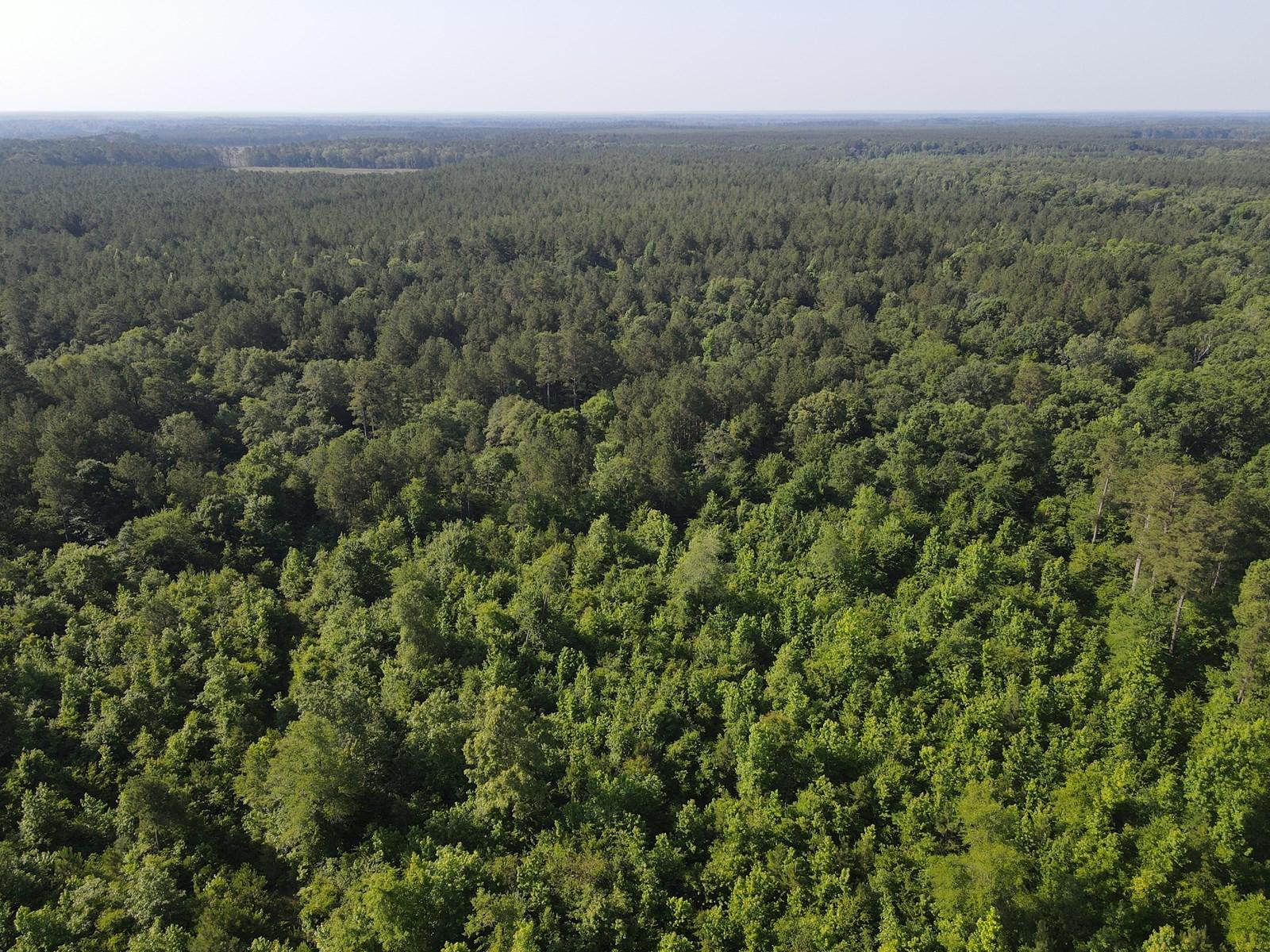 Hunting Property Calhoun County, Arkansas