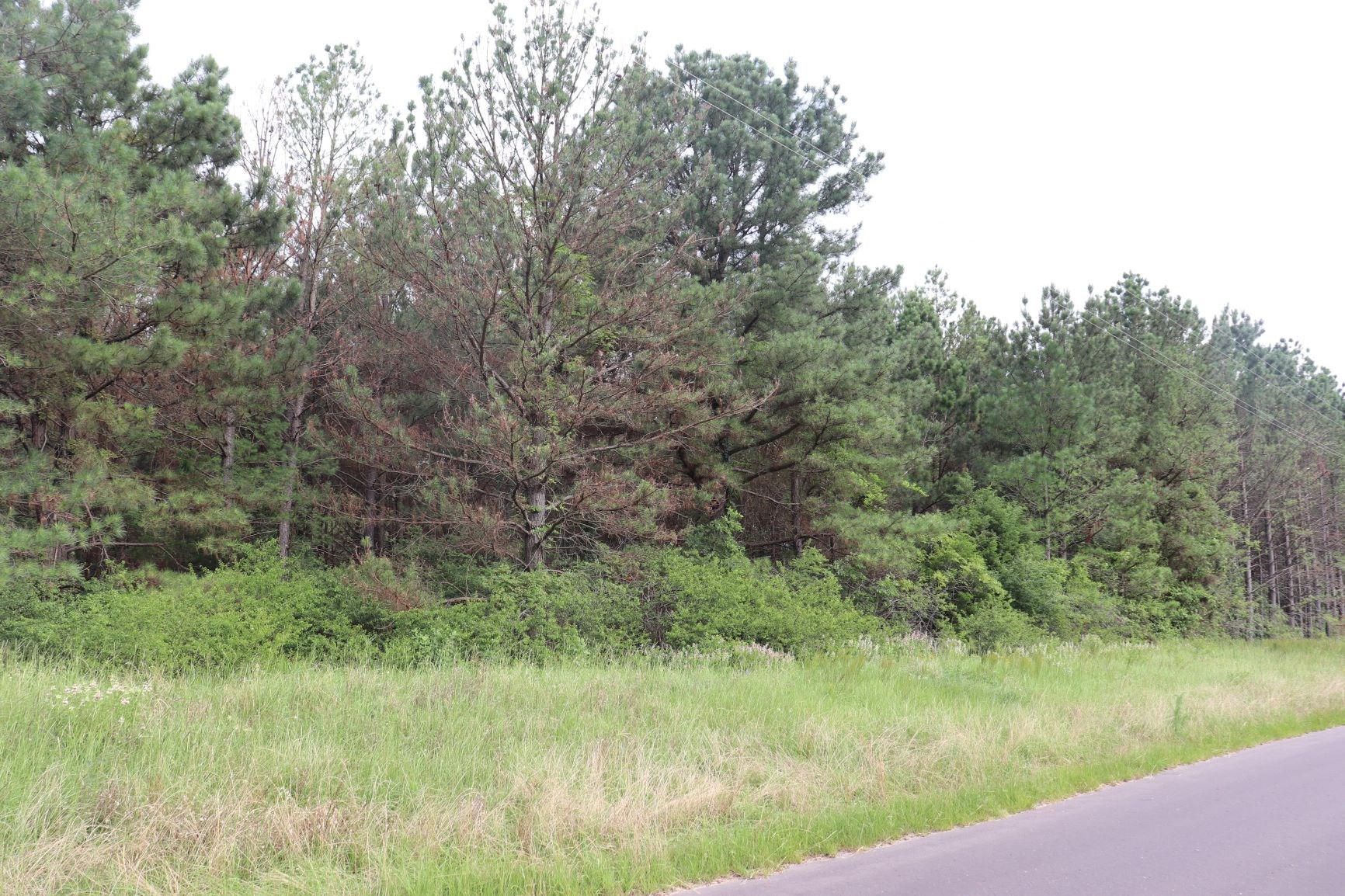 1 WOODED ACRE WOOD COUNTY MINEOLA TEXAS EAST OF DALLAS, TX