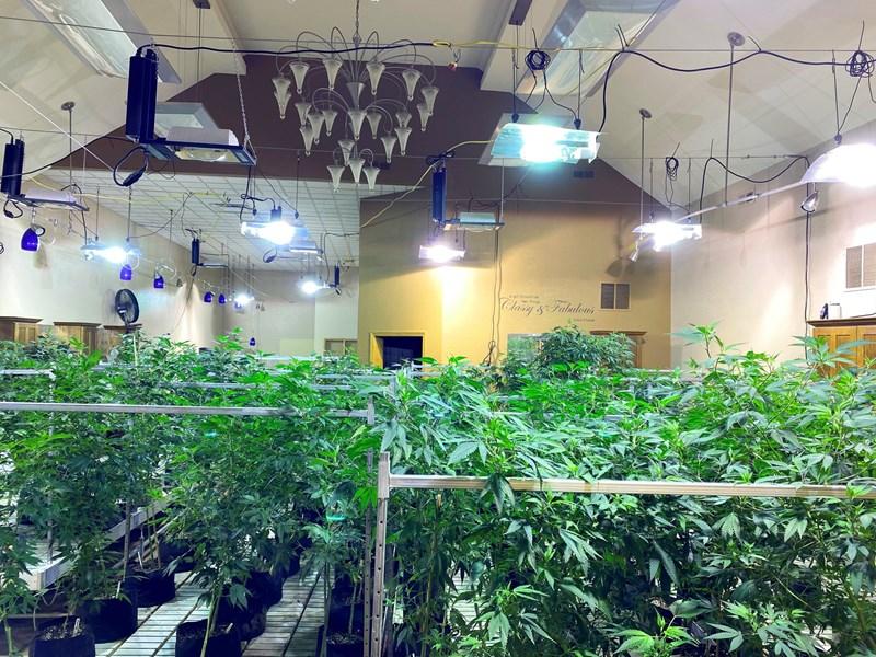 grow room at nebraska hemp facility