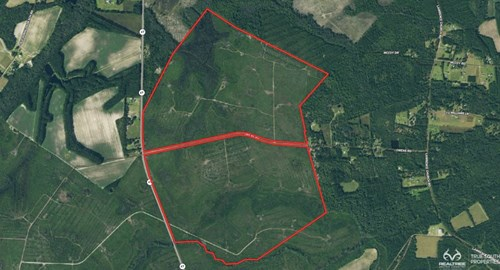 Bulloch County/Pembroke Hunting and Future Timber Land