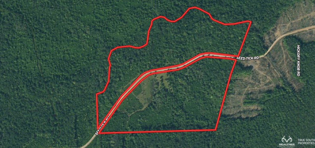 Recreational,Hunting,Timber Land& Future Homesite Bulloch Co