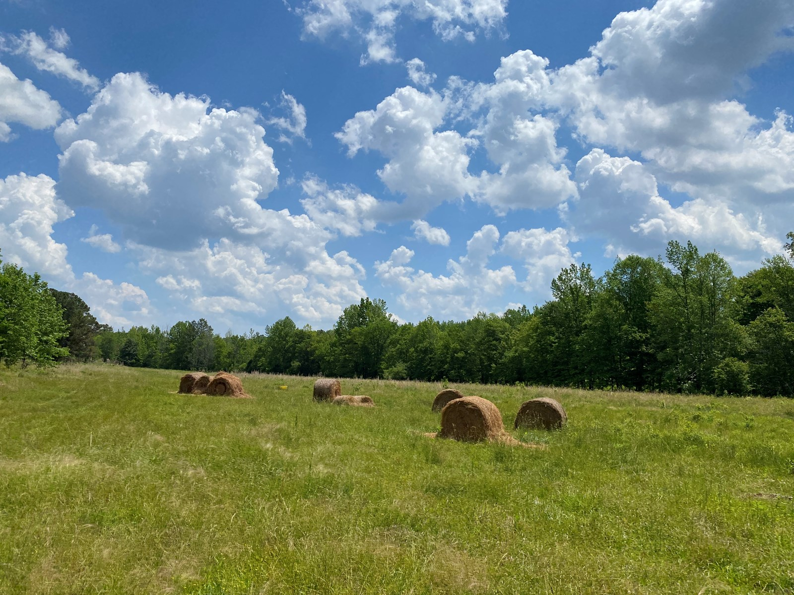 FARM FOR SALE IN TENNESSEE, 3 CREEKS, POND, GREAT HUNTING