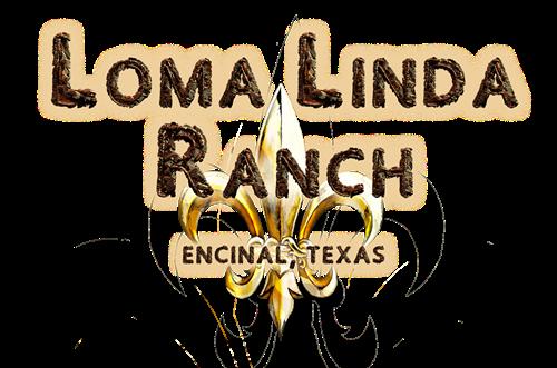 Hunting Land - Extraordinary - South Texas