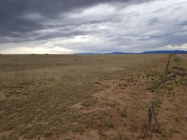 1000 Acres of Ranch Grassland For Sale Near Estancia, NM