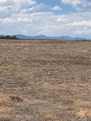 TORRANCE COUNTY, NEW MEXICO LAND FOR SALE NEAR MORIARTY