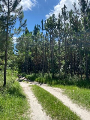 10 ACRES IN LAFAYETTE COUNTY FOR $65,000!!