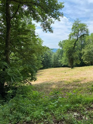 15 ACRES UNRESTRICTED LAND FOR SALE IN EAST TN