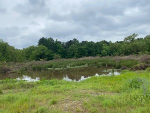 20+ ACRES IN RED RIVER COUNTY, TX/ HUNTING