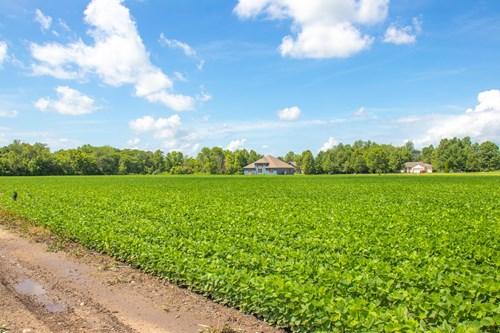 Bulpitt 16 Acre Farm For Sale with Potential Development