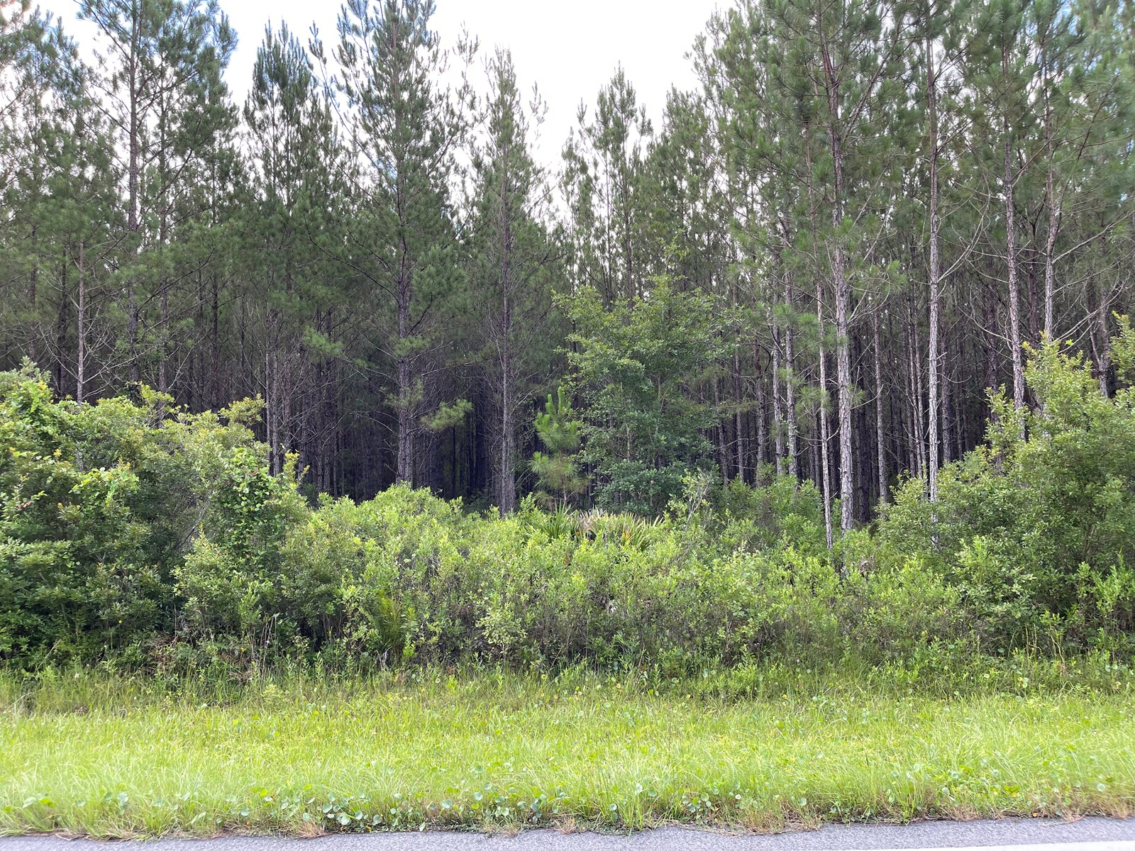 13 ACRES WITH PLANTED PINES IN LULU, FL FOR SALE