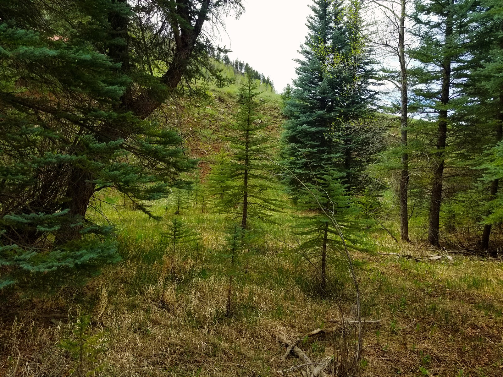 Vacant Land For Sale in Dolores, CO!
