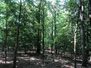 NATURAL TIMBERLAND HUNTING LAND FOR SALE IN OUACHITA CO., AR