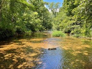 LAND FOR SALE IN TENNESSEE WITH CREEK AND MARKETABLE TIMBER