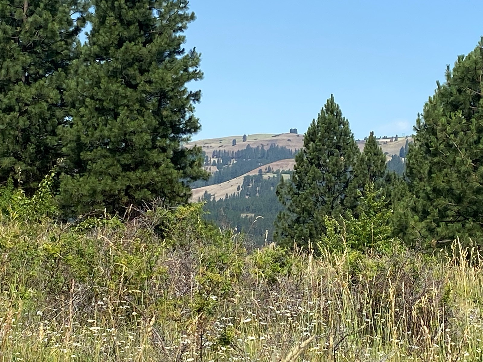 Fantastic acreage, usable land, Peck Idaho