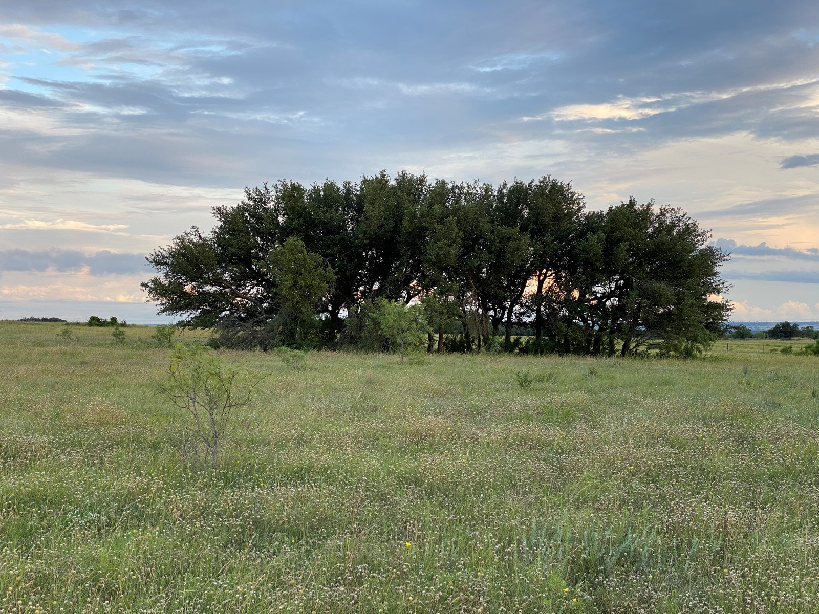 Land for Sale in Central Texas - 33 Acres in Hamilton County