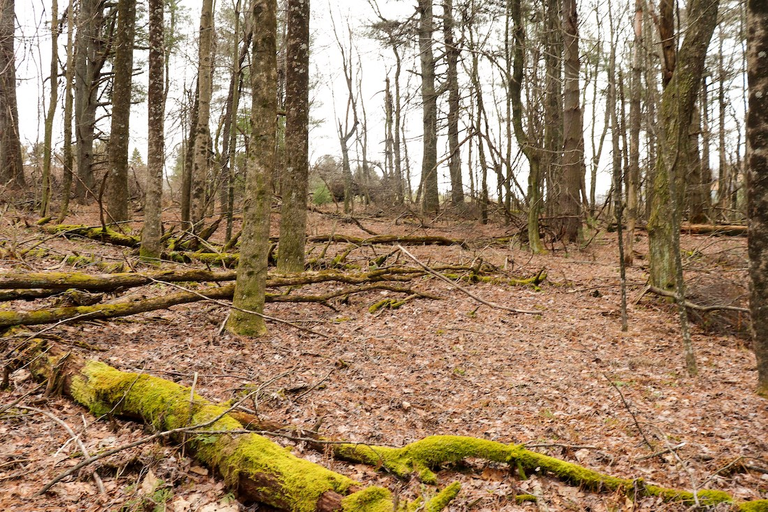 Building Lot for Sale on Golf Course in Fancy Gap VA!