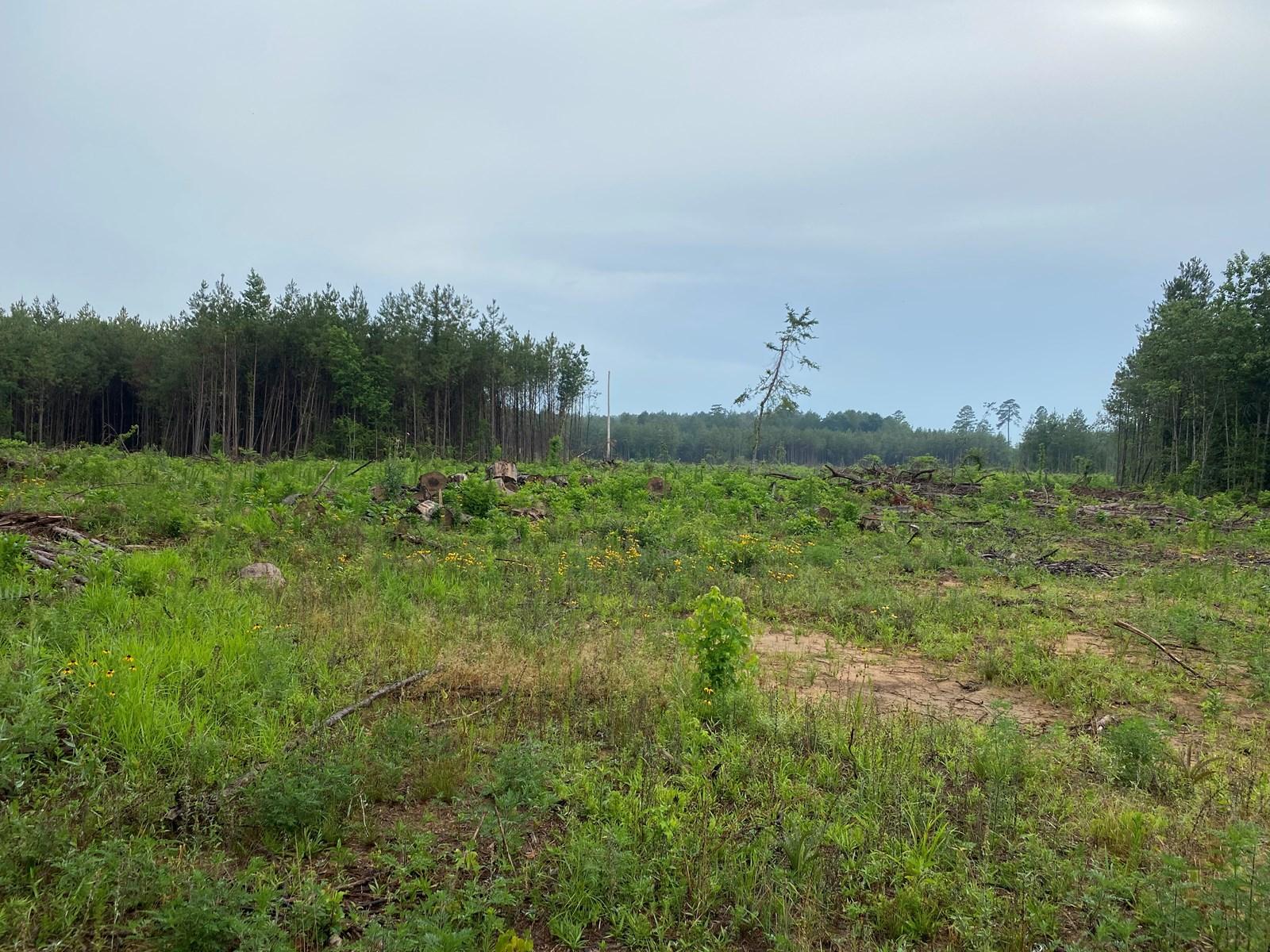 Recreational Timberland near Little Missouri River for Sale!