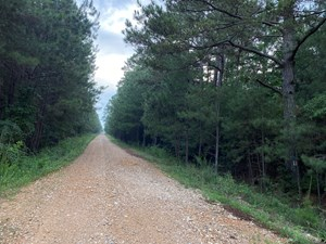 INVESTMENT PINE TIMBERLAND FOR SALE IN NEVADA COUNTY, AR