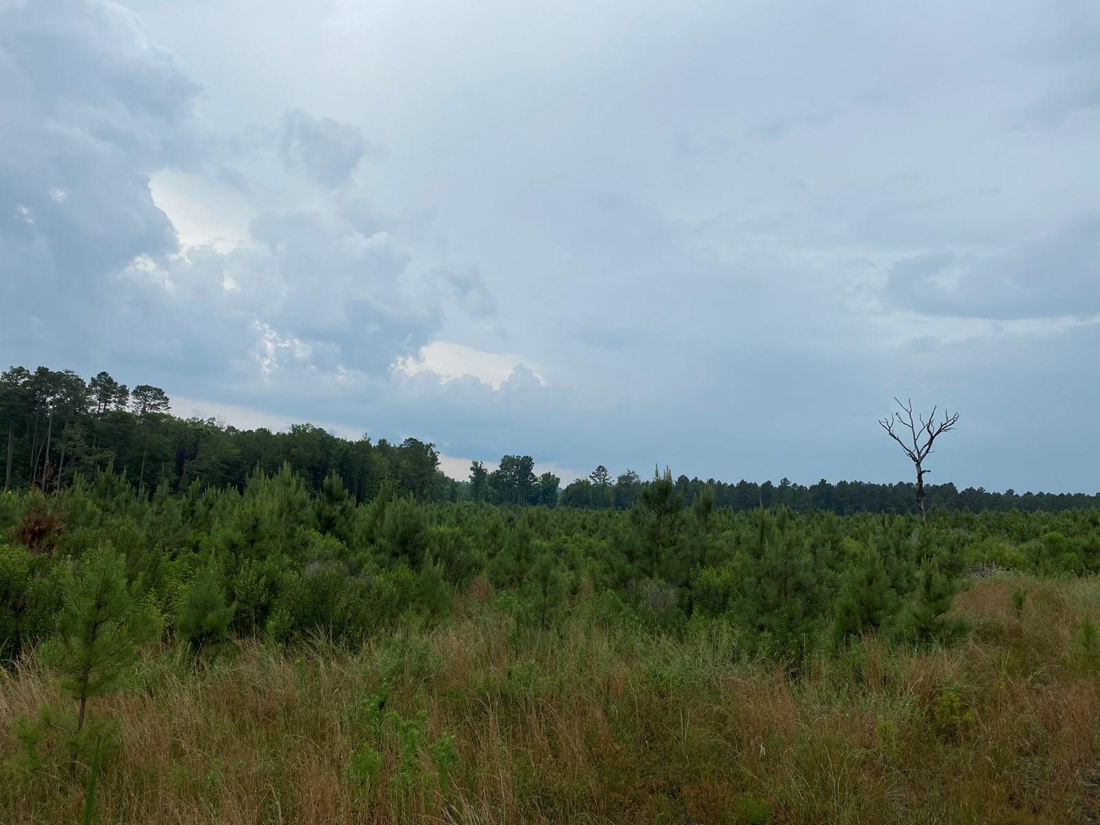 Investment Pine land w/ utilities for sale near Prescott, AR