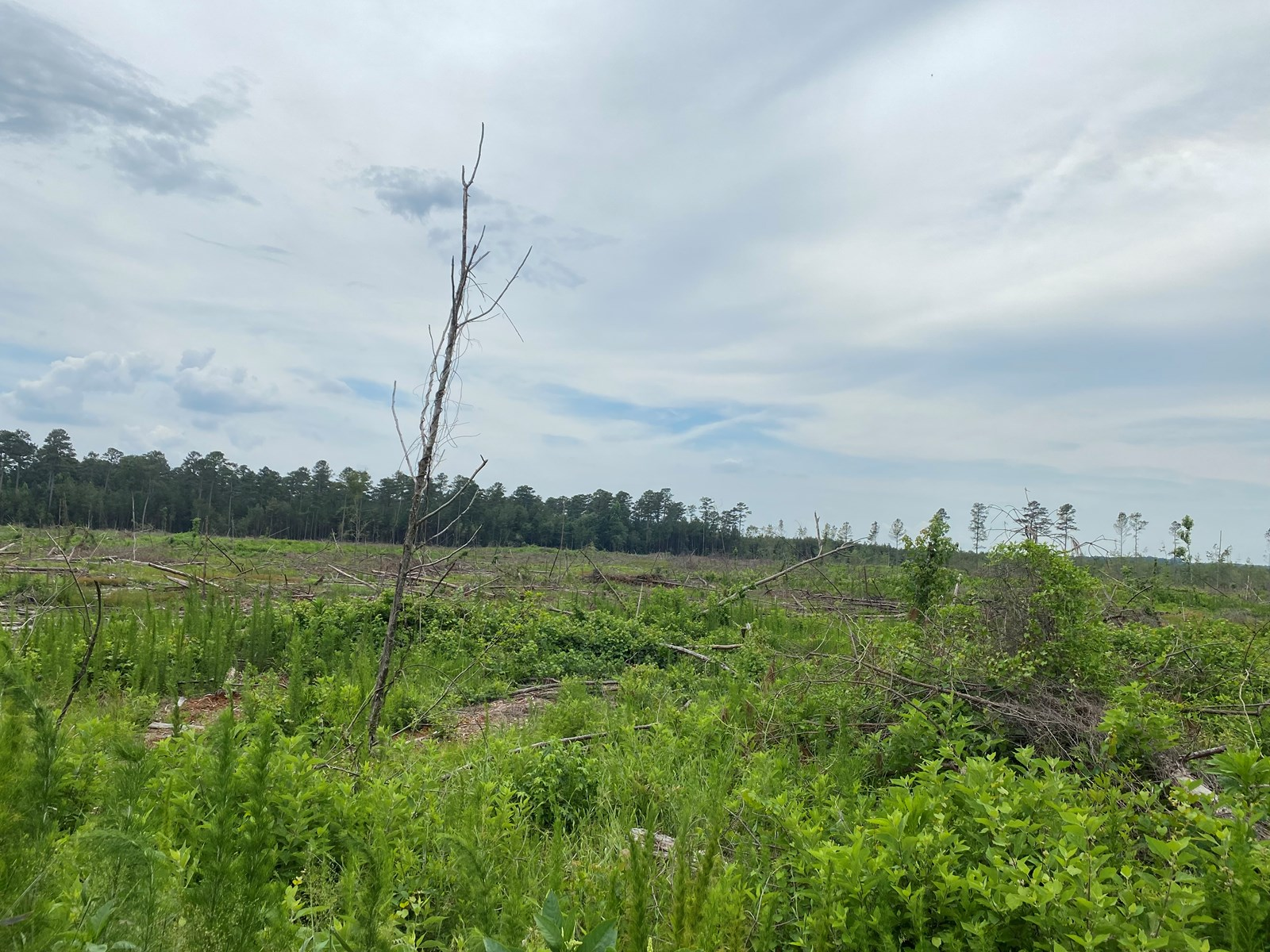 Cleared/Open Land in Nevada County, Arkansas for Sale