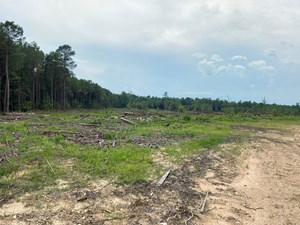 PARTLY CLEARED PINE TIMBERLAND FOR SALE IN NEVADA COUNTY, AR