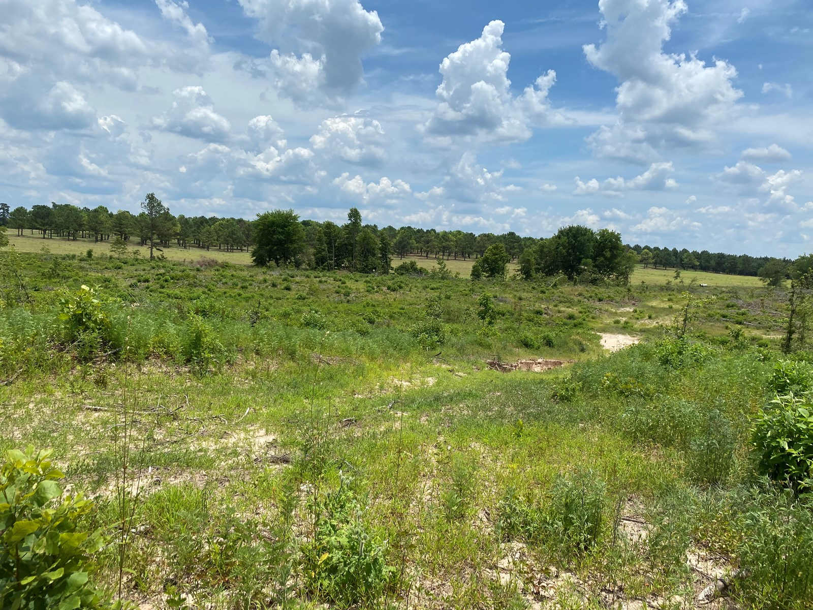 Cleared/Open Land on State Highway near Rosston, AR for Sale