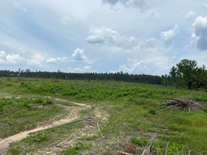 CLEARED/OPEN LAND W/ CREEK IN NEVADA COUNTY, AR FOR SALE