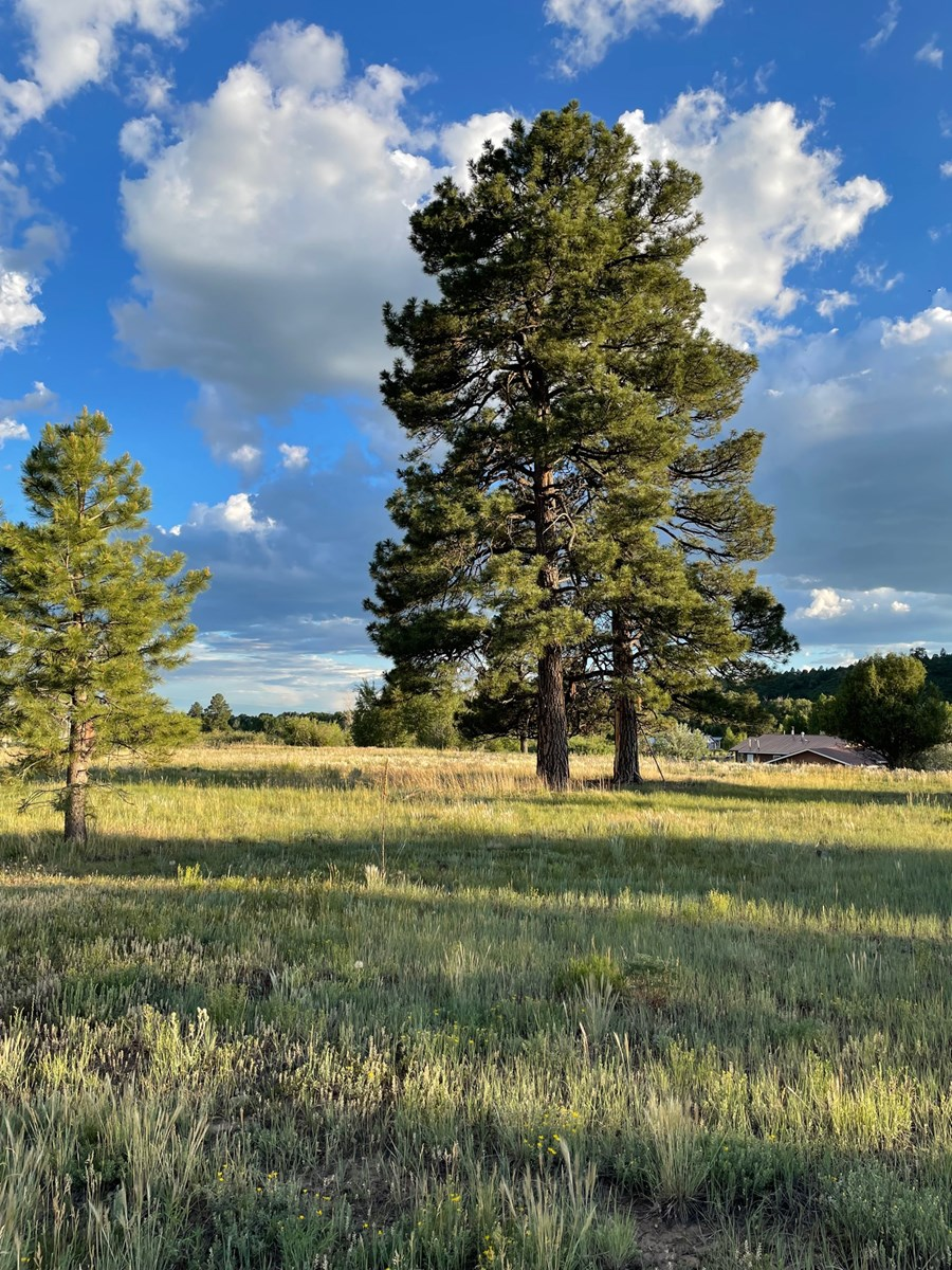 Chama NM Residential Land for Sale / Level Building Site