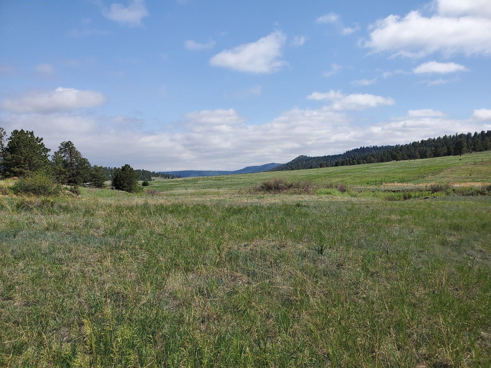 Level lot with trees Florissant CO Stream bed National Fores