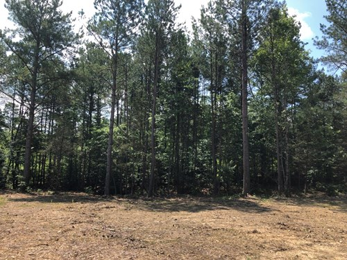 Land with Acreage for Sale in Centerville, Tennessee