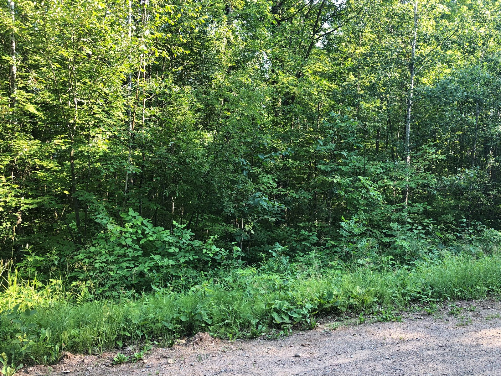 2+ Acre Recreational Lot for Sale in Sandstone, MN