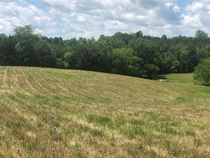 7.5 ACRES UNRESTRICTED LAND IN WHITESBURG, TN FOR SALE