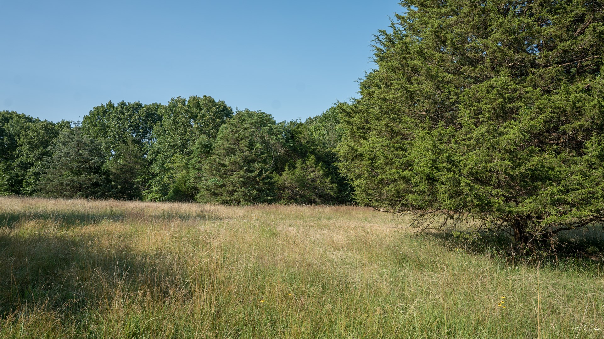 Land to Build on in South Central Missouri
