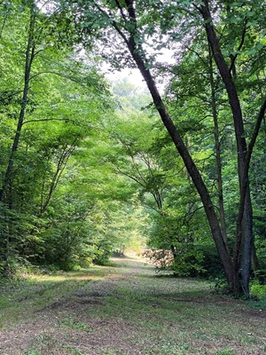 RECREATIONAL & HUNTING LAND FOR SALE IN HANCOCK COUNTY, TN