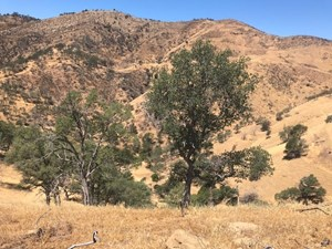 NORTHERN CALIFORNIA REALTREE HUNTING PROPERTIES FOR SALE