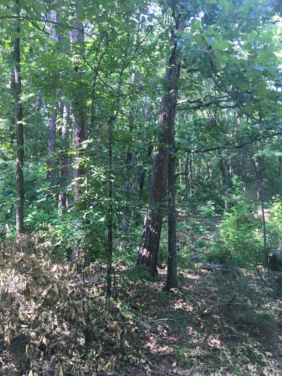 2 Lots In Subdivision Near Greers Ferry Lake For Sale