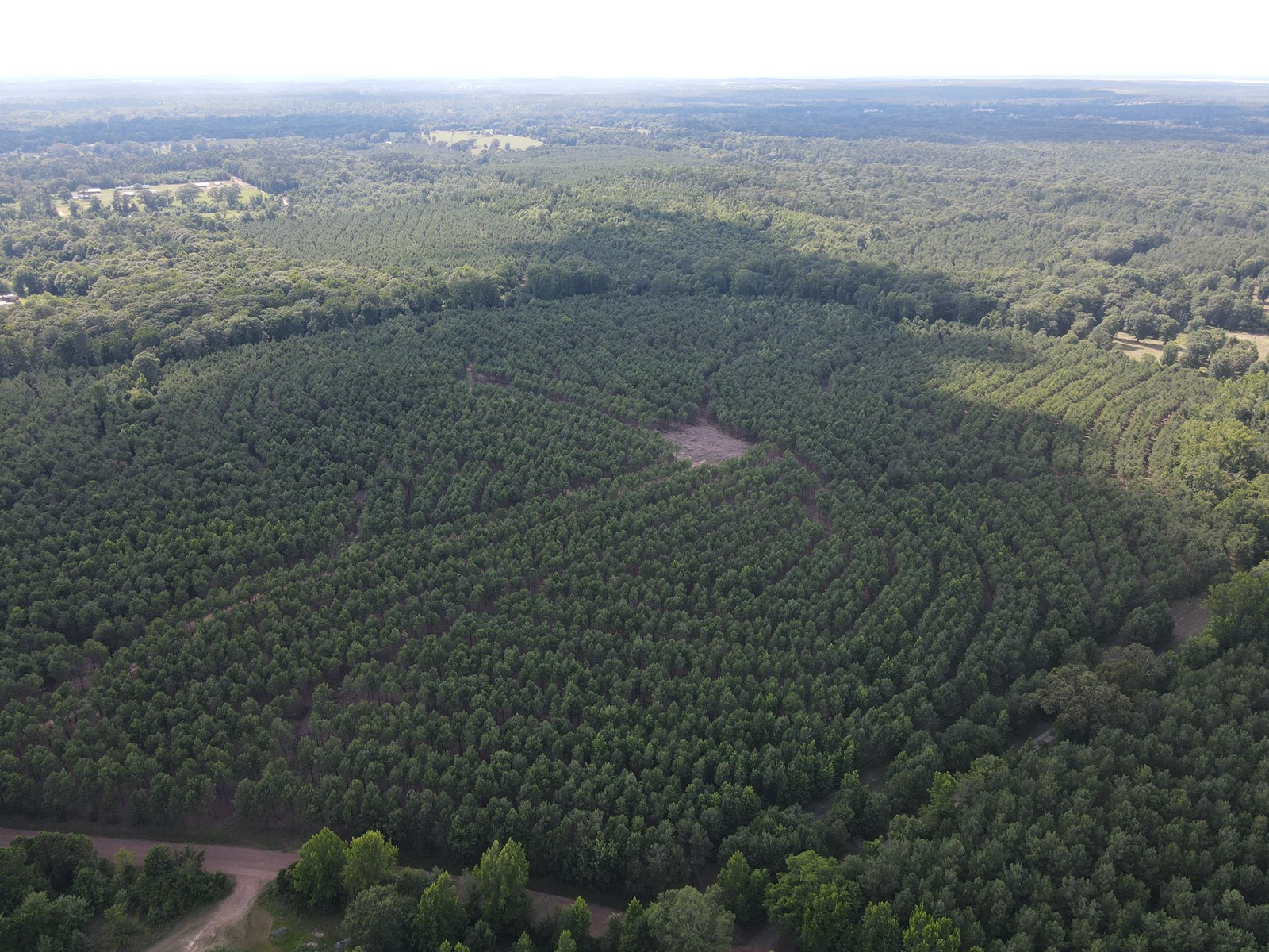 Timberland in East Texas